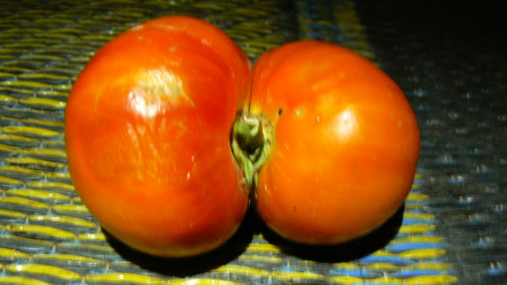 A few posts back we gave you double banana...  now behold, bum tomato!